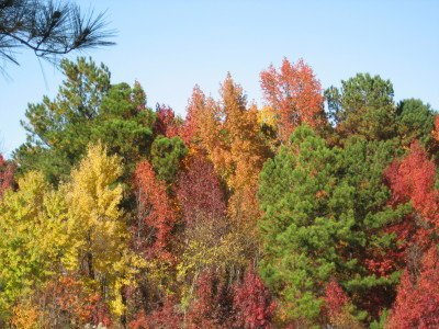 fall-on-the-west-beltline_1_1_1.jpg