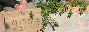 mistletoe-sign_1_1