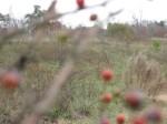 sunnybrook-meadow_1_1