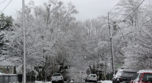 snowy-oakwood-trees_1_1