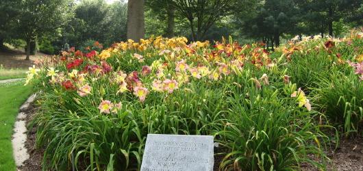 Fletcher lilies_1_1