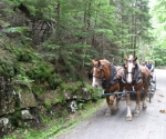 Acadia carriage_1_1