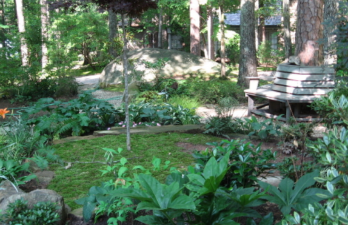 David spain steward of moss raleigh nature for Landscaping ideas for wooded areas