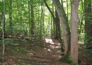 Brookhaven Trail_1_1