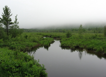 Acadia interior creek_1_1