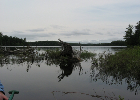 Long Pond from marshy area_1_1
