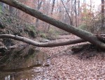 House Creek besideBeltline
