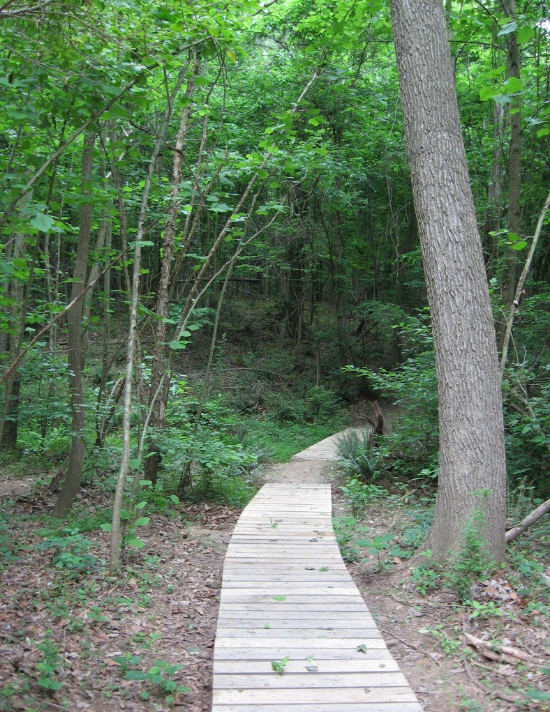 House Creek boardwalk