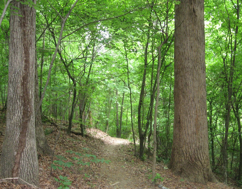 House Creek side trail