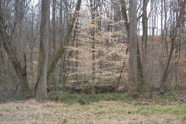 bottomland woods by House Creek_1_1