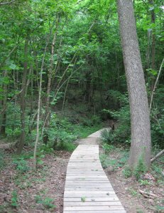 Side Trail up slope at Marshall Memorial Park