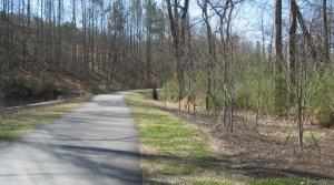 new plantings along House Creek Trail