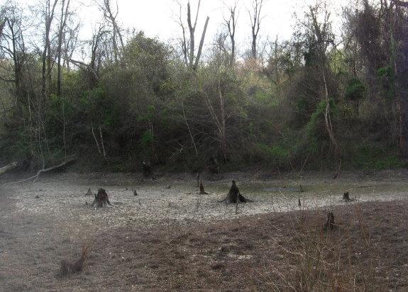 dry wetland near stairs of causeway_1_1