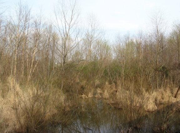 former beaver lodge water restored!_1_1