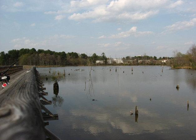 Raleigh Swamp_1_1