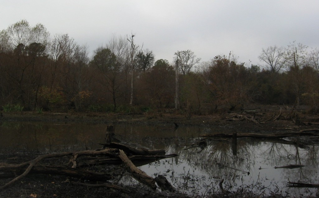 Blue Heron rookery at Raleigh Swamp