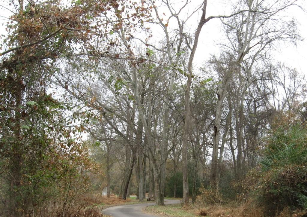hackberry grove on Buckeye just east of Raleigh Boulevard