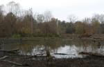 low water at Blue Heron marsh