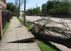 downed tree at Shaw University after tornado