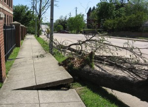 downed tree at Shaw University after tornado