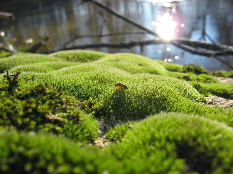 moss on rocky overhang