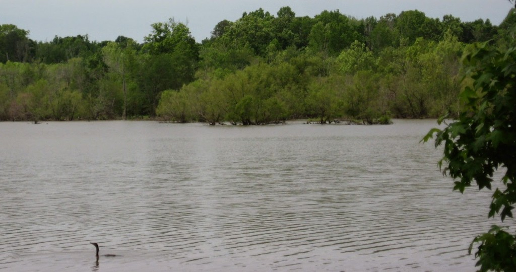 Cypress trees on the southwestern shore of Falls Lake