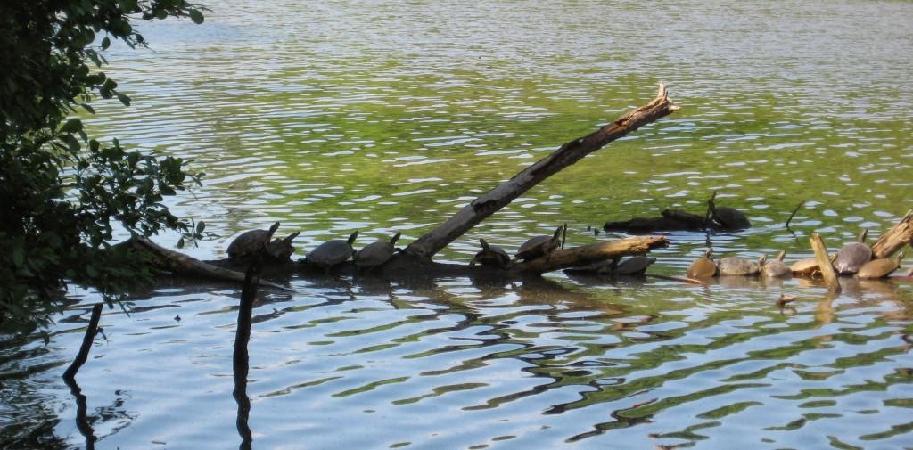 Sliders at Lake Lynn