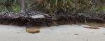DRiftwood Beach erosion