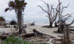 Driftwood Beach title
