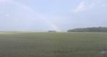 Edisto Island rainbow